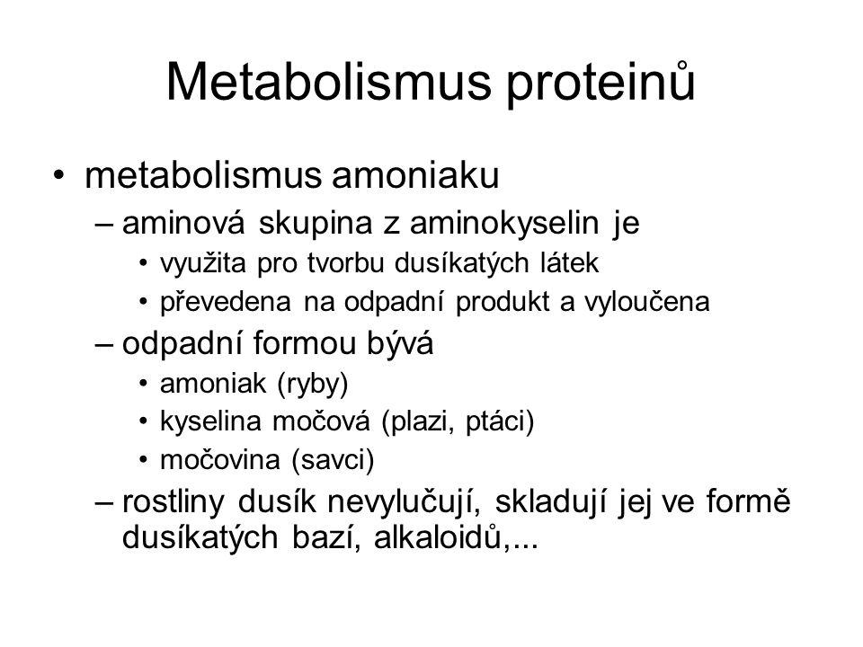 Metabolismus proteinů