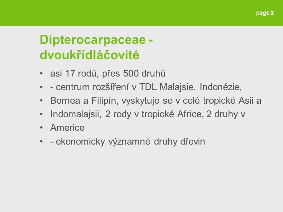 Dipterocarpaceae - dvoukřídláčovité