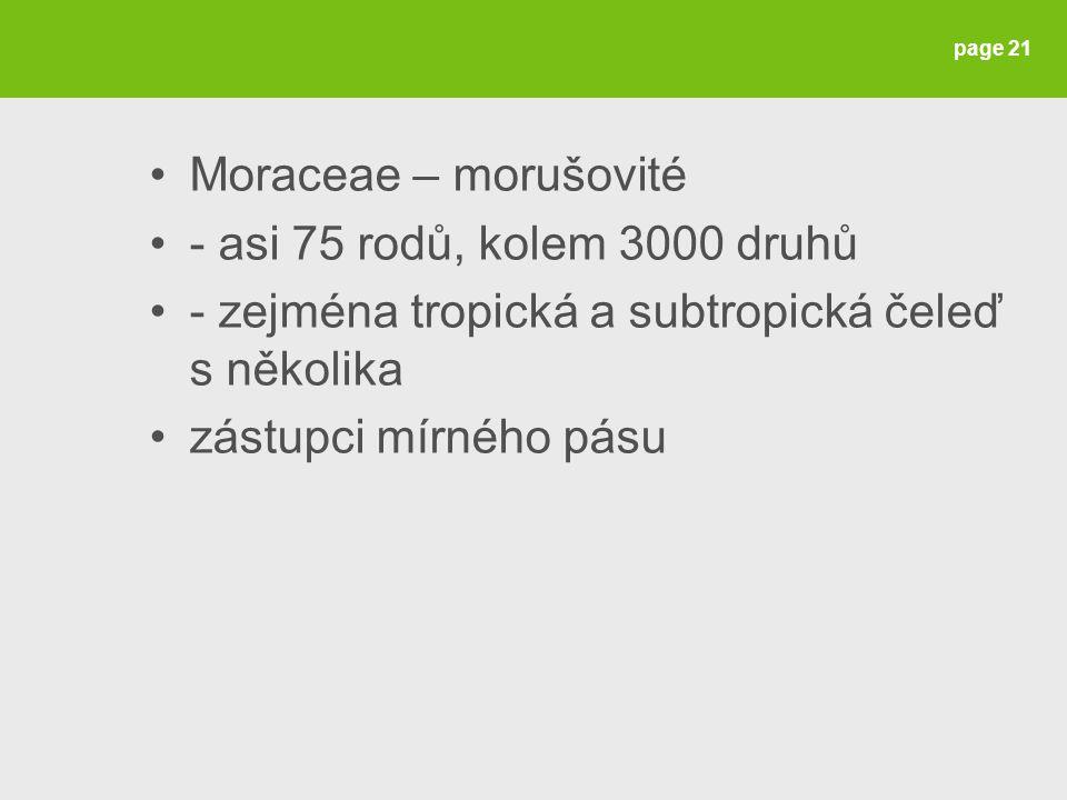 Moraceae – morušovité - asi 75 rodů, kolem 3000 druhů. - zejména tropická a subtropická čeleď s několika.