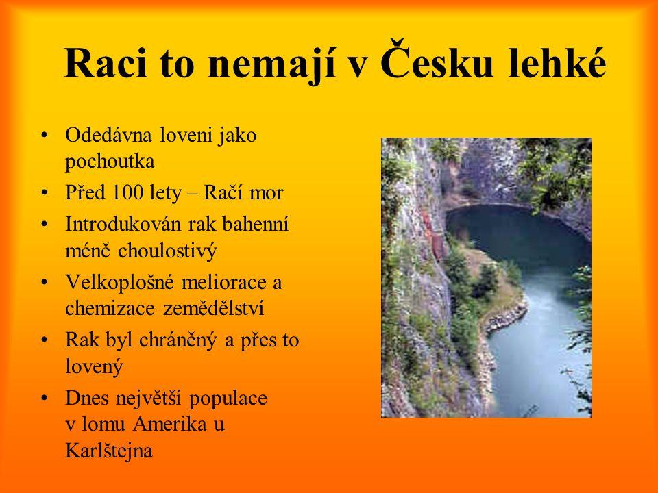 Raci to nemají v Česku lehké