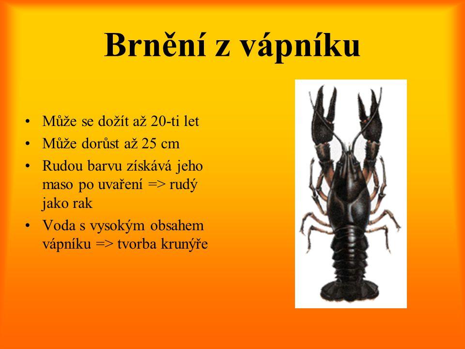 Brnění z vápníku Může se dožít až 20-ti let Může dorůst až 25 cm