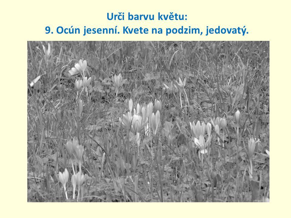 Urči barvu květu: 9. Ocún jesenní. Kvete na podzim, jedovatý.