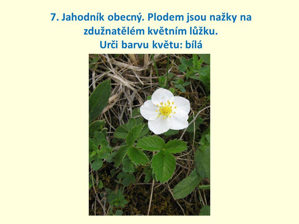7. Jahodník obecný. Plodem jsou nažky na zdužnatělém květním lůžku