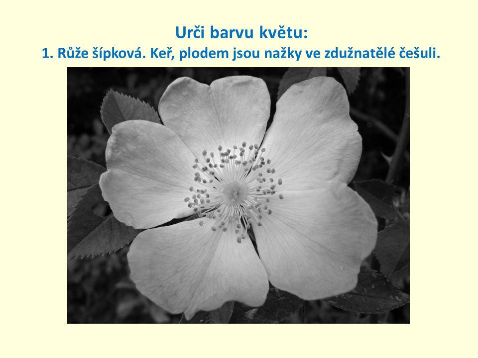 Urči barvu květu: 1. Růže šípková
