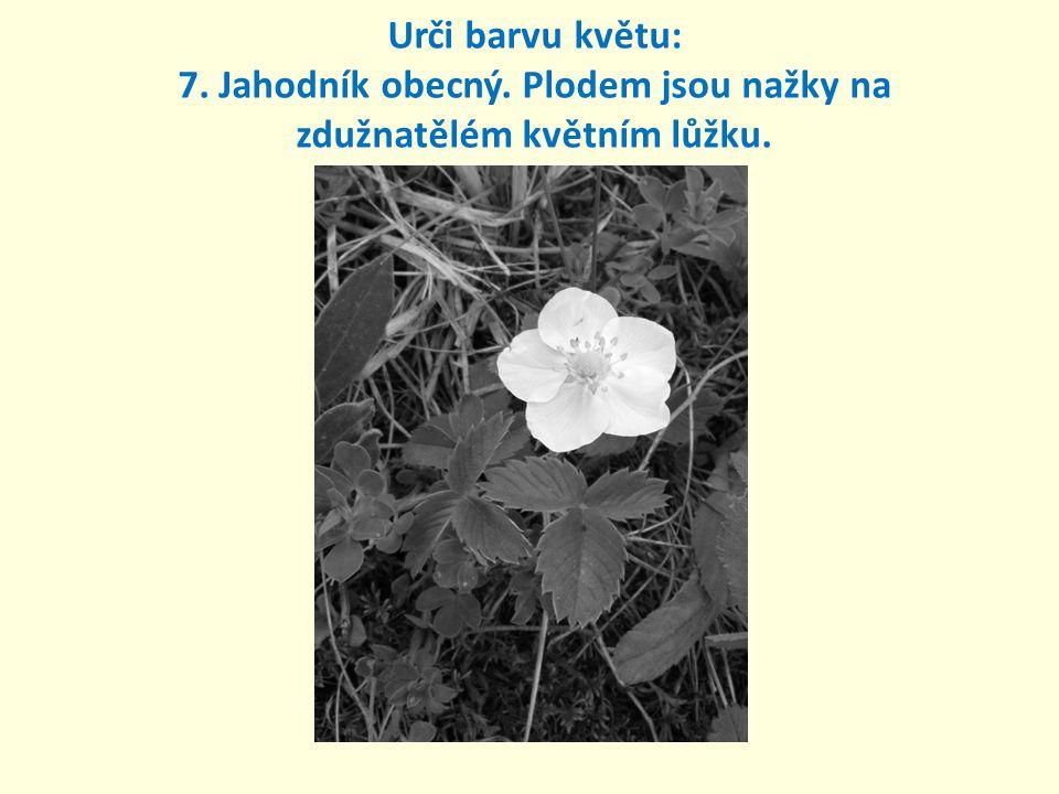 Urči barvu květu: 7. Jahodník obecný