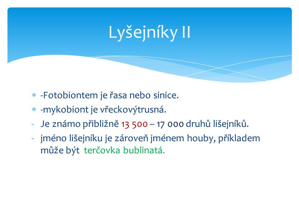 Lyšejníky II -Fotobiontem je řasa nebo sinice.