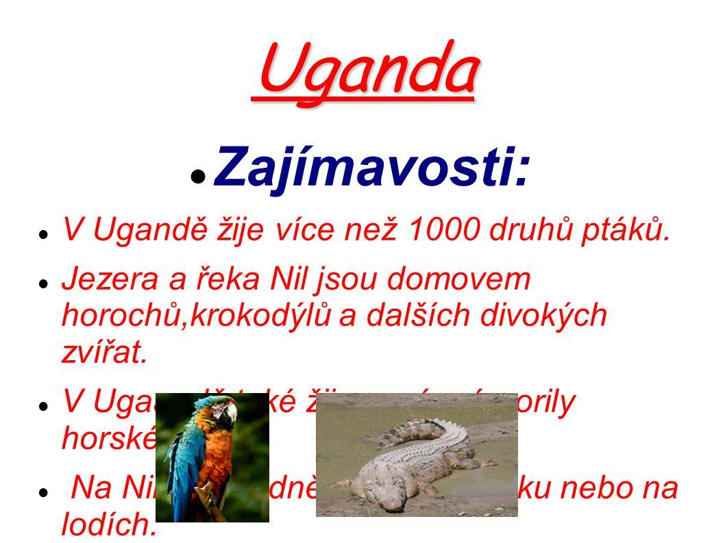 Uganda Zajímavosti: V Ugandě žije více než 1000 druhů ptáků.
