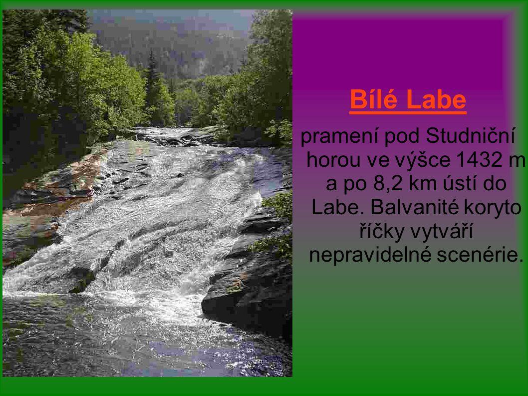 Bílé Labe pramení pod Studniční horou ve výšce 1432 m a po 8,2 km ústí do Labe.