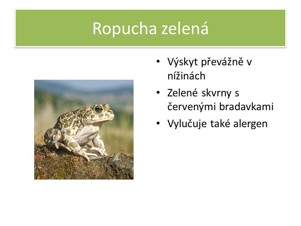 Ropucha zelená Výskyt převážně v nížinách