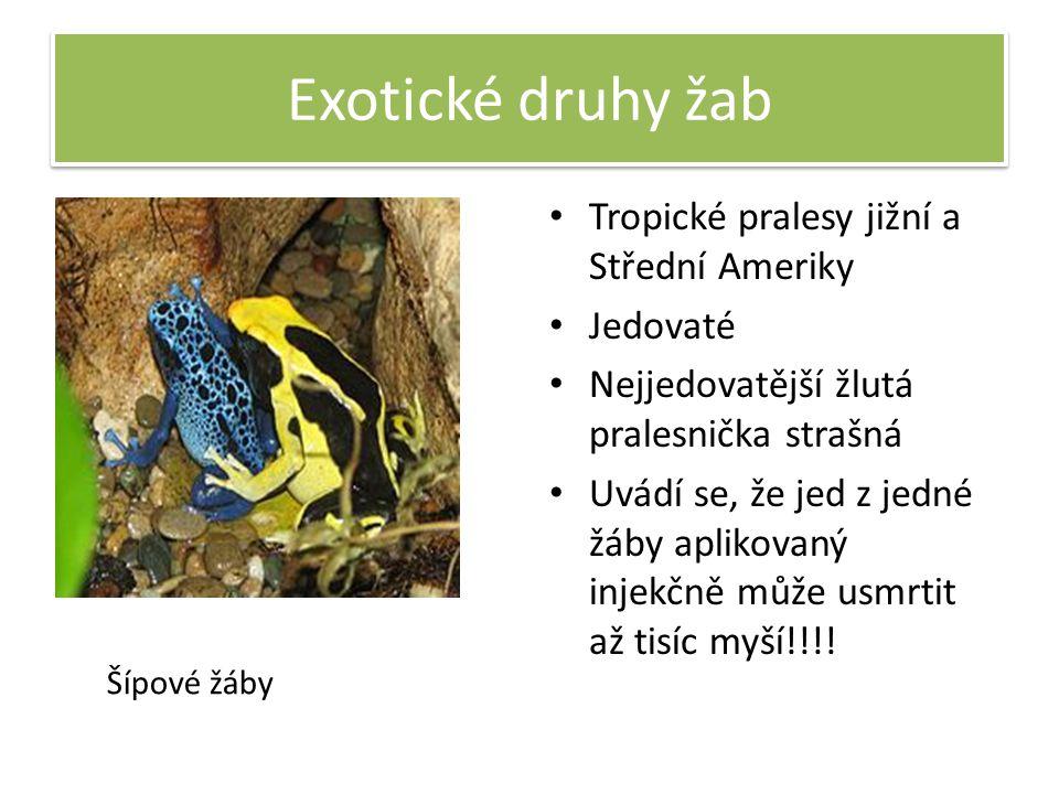 Exotické druhy žab Tropické pralesy jižní a Střední Ameriky Jedovaté