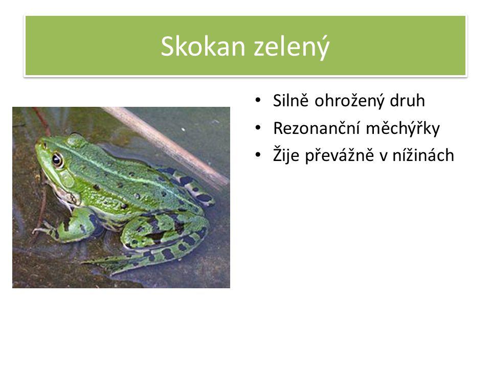 Skokan zelený Silně ohrožený druh Rezonanční měchýřky