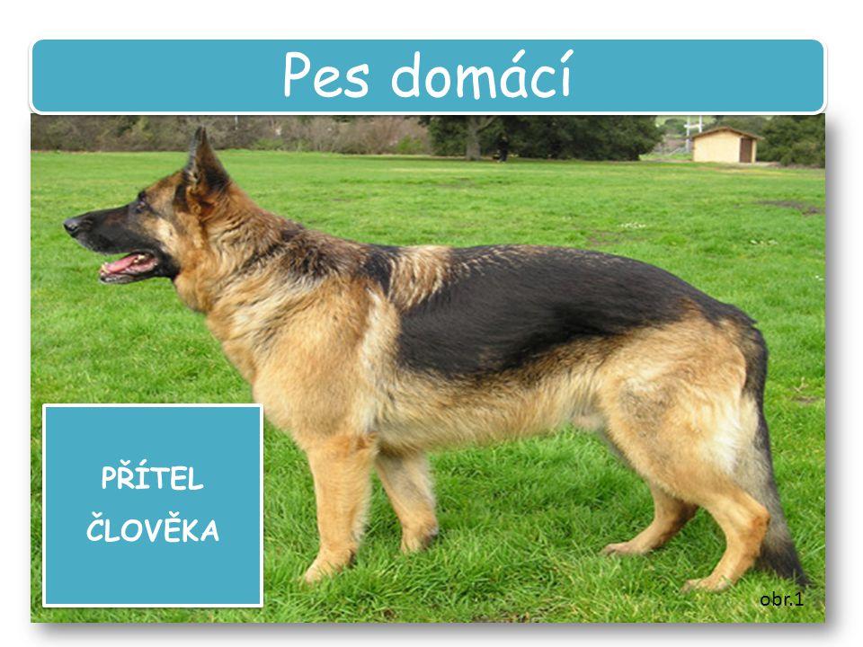 Pes domácí PŘÍTEL ČLOVĚKA obr.1