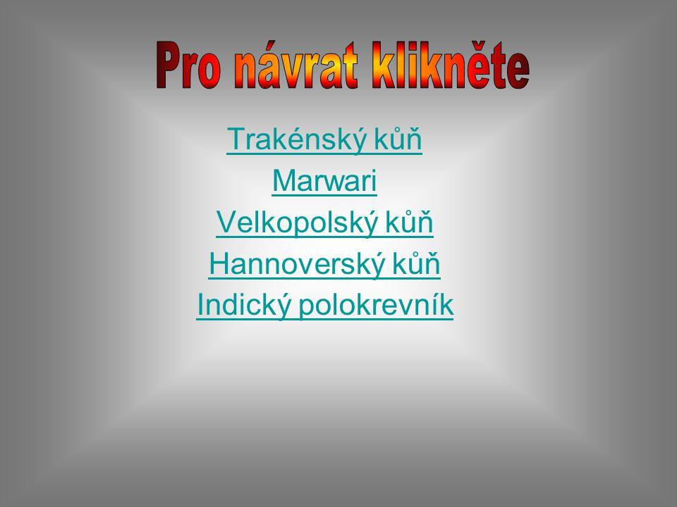 Pro návrat klikněte Trakénský kůň Marwari Velkopolský kůň