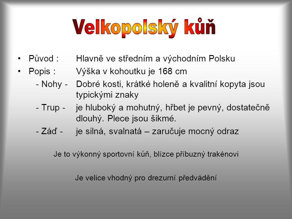 Velkopolský kůň Původ : Hlavně ve středním a východním Polsku