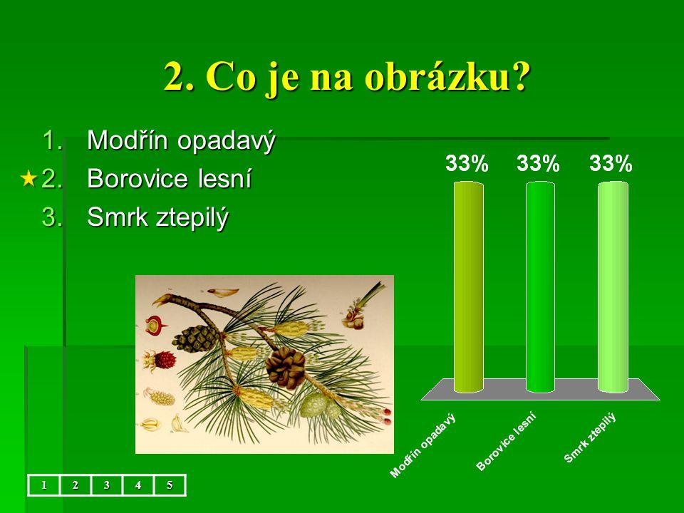 2. Co je na obrázku Modřín opadavý Borovice lesní Smrk ztepilý 1 2 3