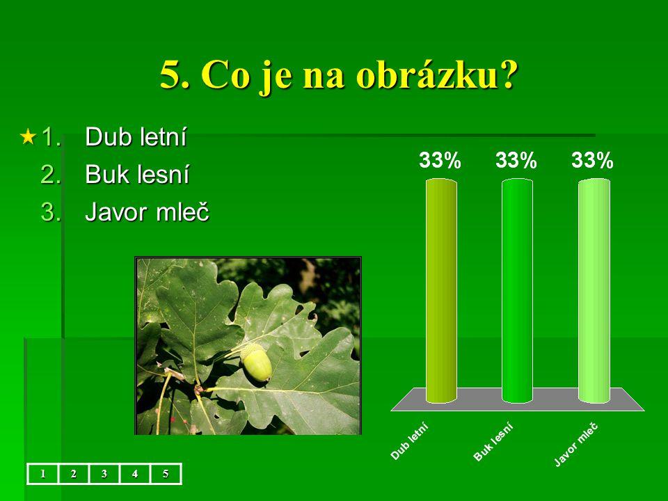 5. Co je na obrázku 5 Dub letní Buk lesní Javor mleč 1 2 3 4 5