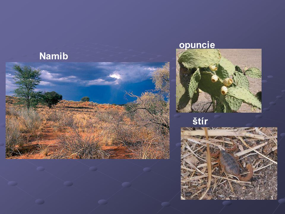 opuncie Namib štír