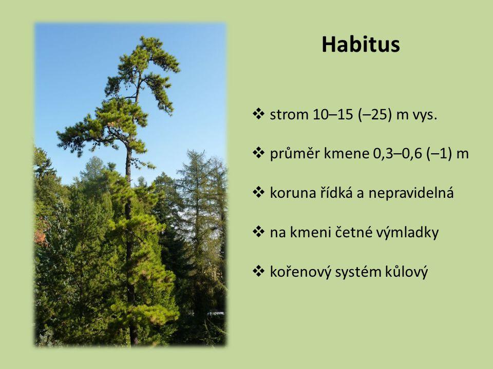 Habitus strom 10–15 (–25) m vys. průměr kmene 0,3–0,6 (–1) m