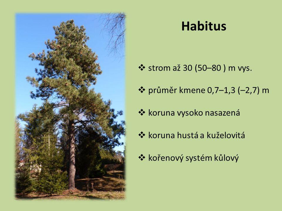 Habitus strom až 30 (50–80 ) m vys. průměr kmene 0,7–1,3 (–2,7) m