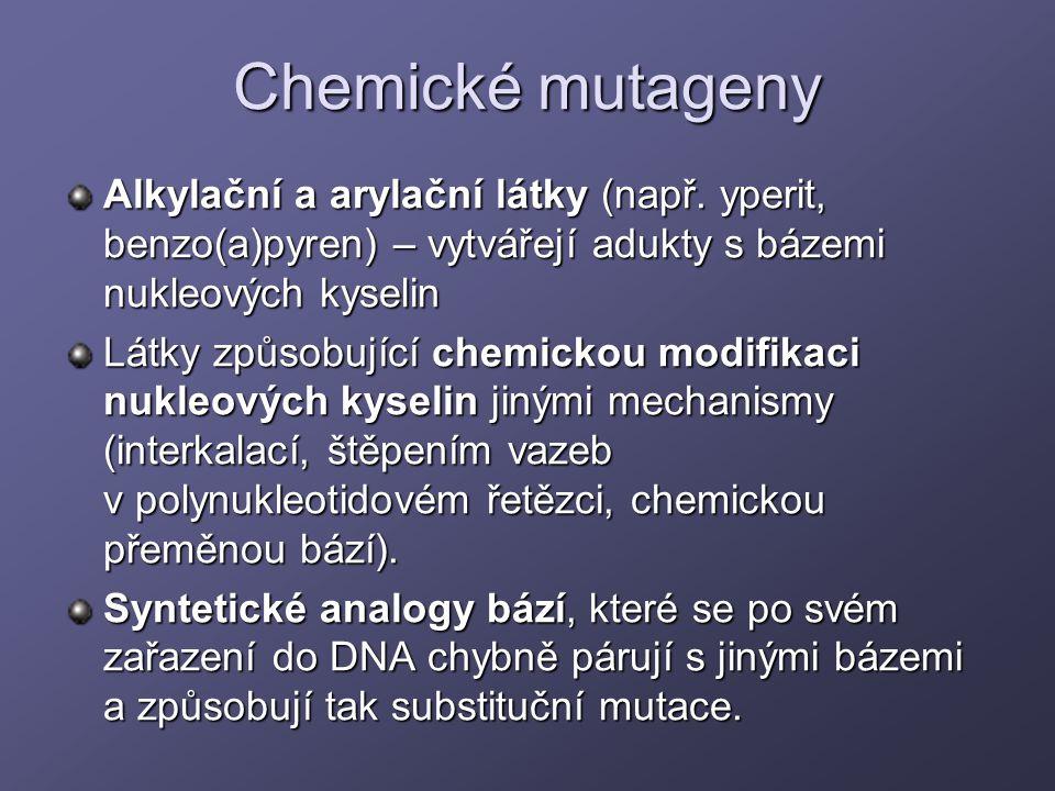 Chemické mutageny Alkylační a arylační látky (např. yperit, benzo(a)pyren) – vytvářejí adukty s bázemi nukleových kyselin.