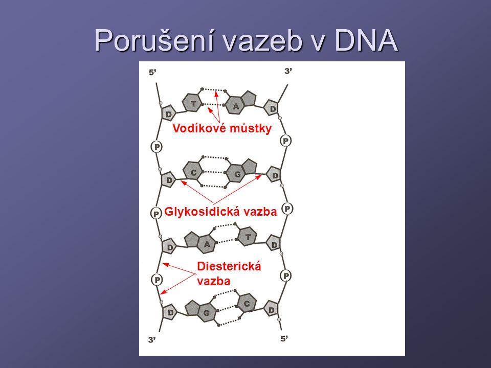 Porušení vazeb v DNA Vodíkové můstky Glykosidická vazba