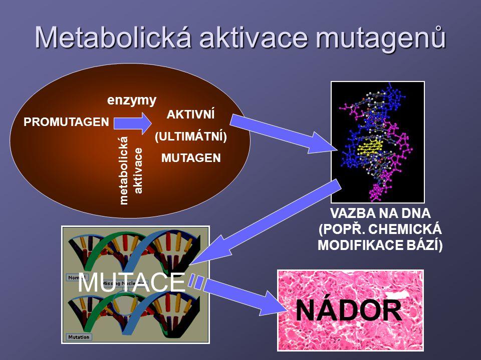 Metabolická aktivace mutagenů