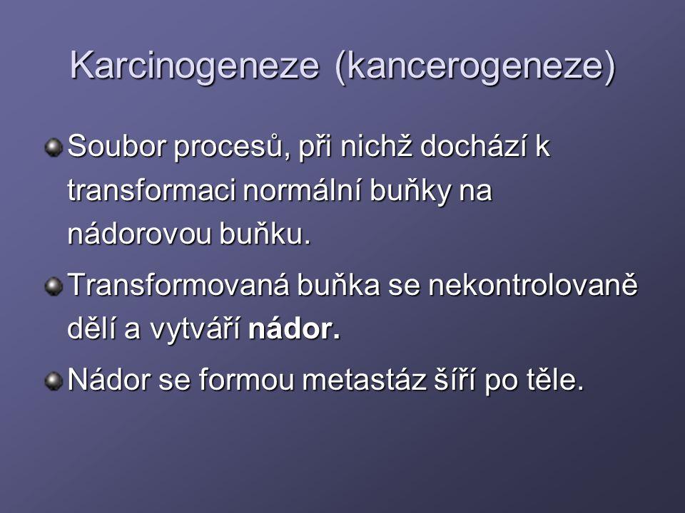 Karcinogeneze (kancerogeneze)
