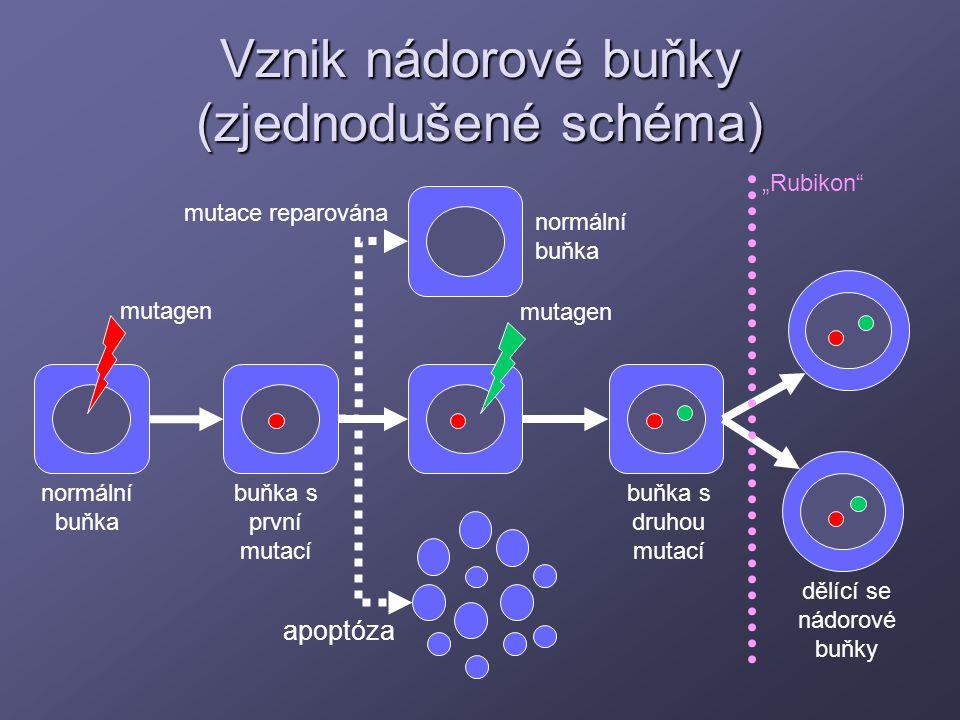 Vznik nádorové buňky (zjednodušené schéma)