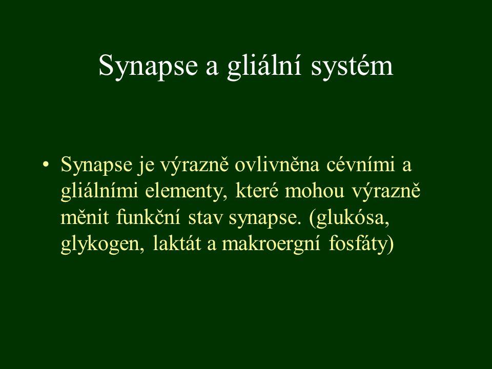 Synapse a gliální systém