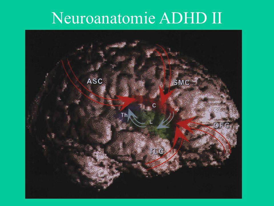 Neuroanatomie ADHD II