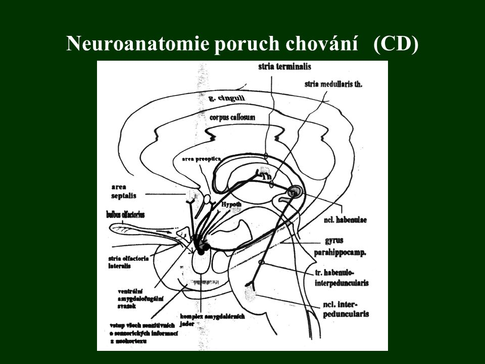 Neuroanatomie poruch chování (CD)