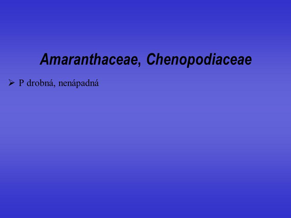 Amaranthaceae, Chenopodiaceae
