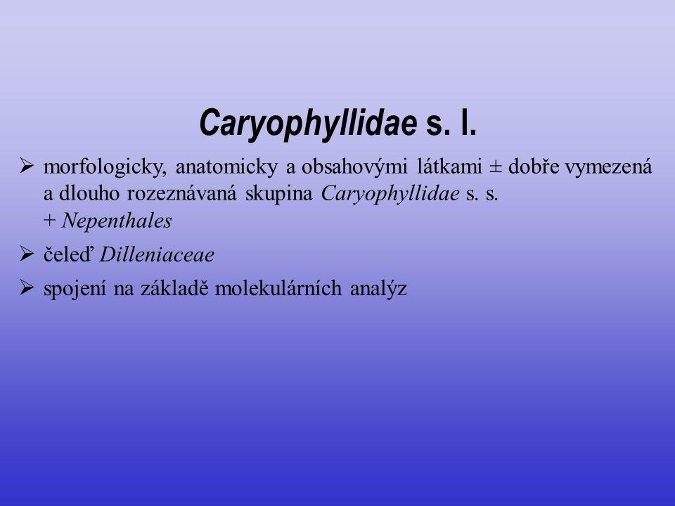 Caryophyllidae s. l. morfologicky, anatomicky a obsahovými látkami ± dobře vymezená a dlouho rozeznávaná skupina Caryophyllidae s. s. + Nepenthales.