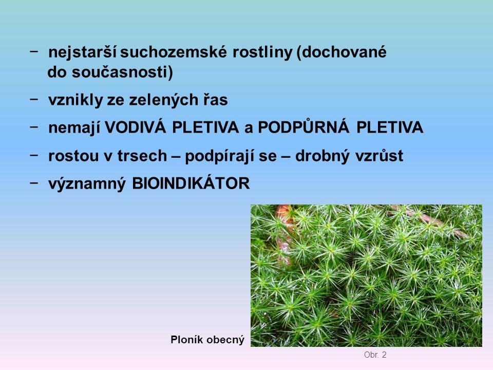 nejstarší suchozemské rostliny (dochované do současnosti)