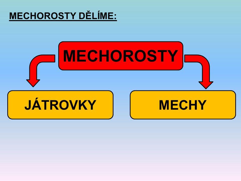 MECHOROSTY DĚLÍME: MECHOROSTY JÁTROVKY MECHY