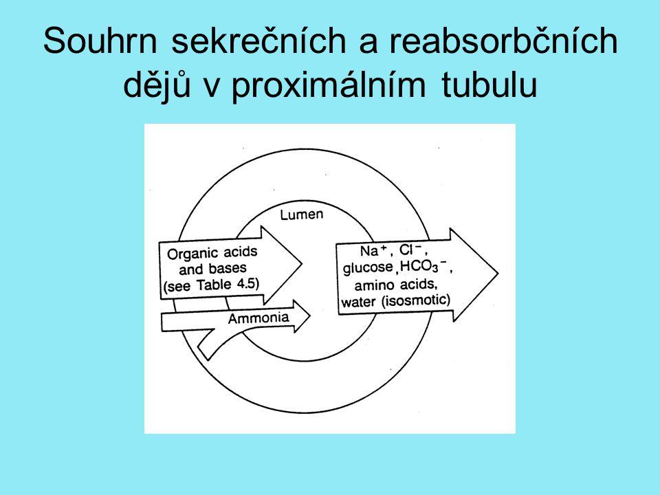 Souhrn sekrečních a reabsorbčních dějů v proximálním tubulu