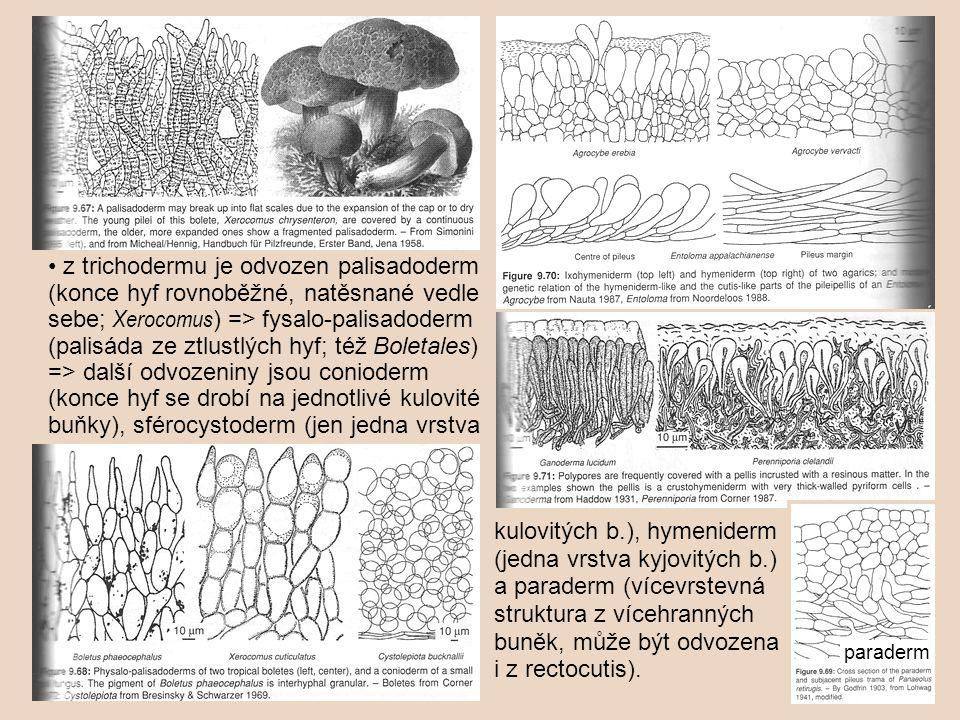 • z trichodermu je odvozen palisadoderm (konce hyf rovnoběžné, natěsnané vedle sebe; Xerocomus) => fysalo-palisadoderm (palisáda ze ztlustlých hyf; též Boletales) => další odvozeniny jsou conioderm (konce hyf se drobí na jednotlivé kulovité buňky), sférocystoderm (jen jedna vrstva