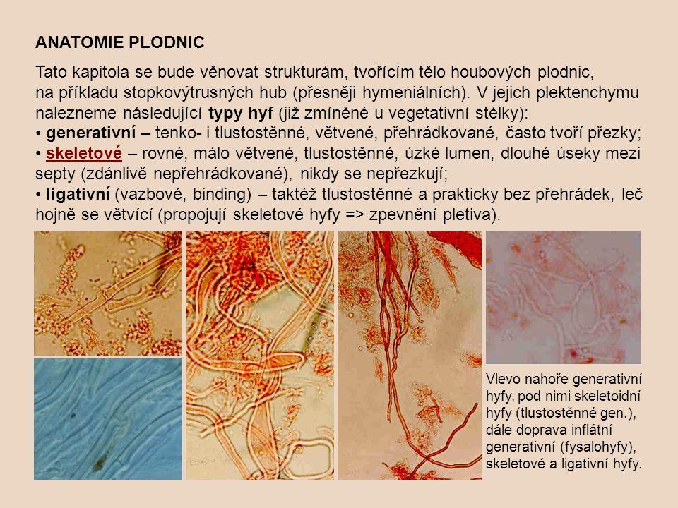 ANATOMIE PLODNIC