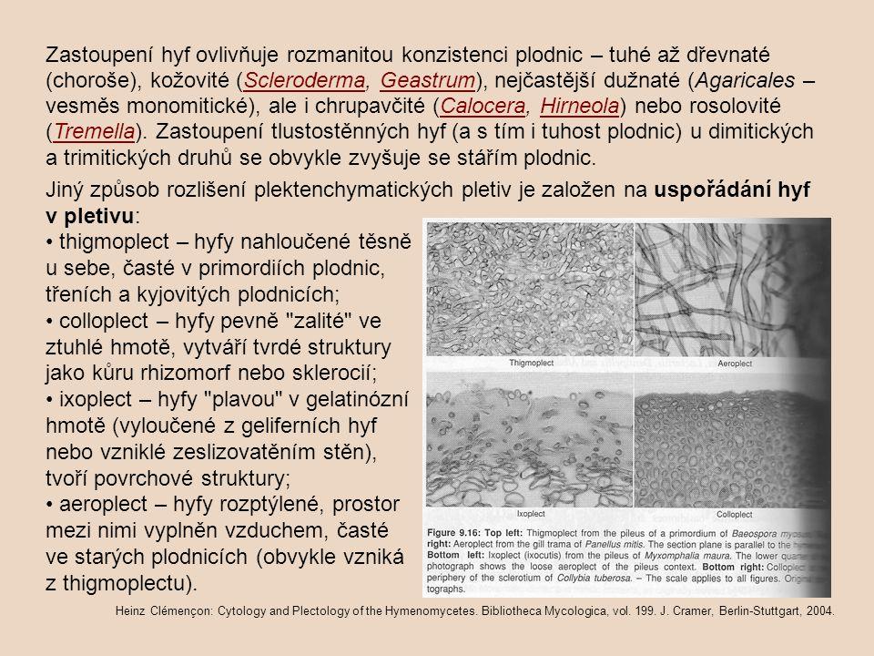 Zastoupení hyf ovlivňuje rozmanitou konzistenci plodnic – tuhé až dřevnaté (choroše), kožovité (Scleroderma, Geastrum), nejčastější dužnaté (Agaricales – vesměs monomitické), ale i chrupavčité (Calocera, Hirneola) nebo rosolovité (Tremella). Zastoupení tlustostěnných hyf (a s tím i tuhost plodnic) u dimitických a trimitických druhů se obvykle zvyšuje se stářím plodnic.