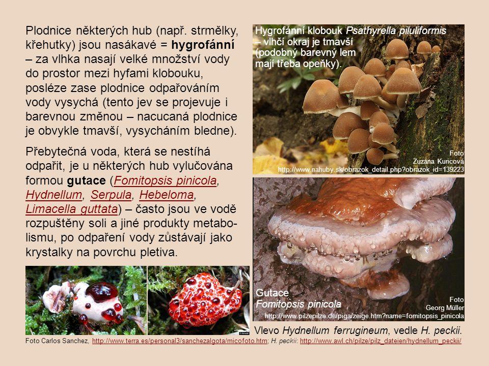 Plodnice některých hub (např