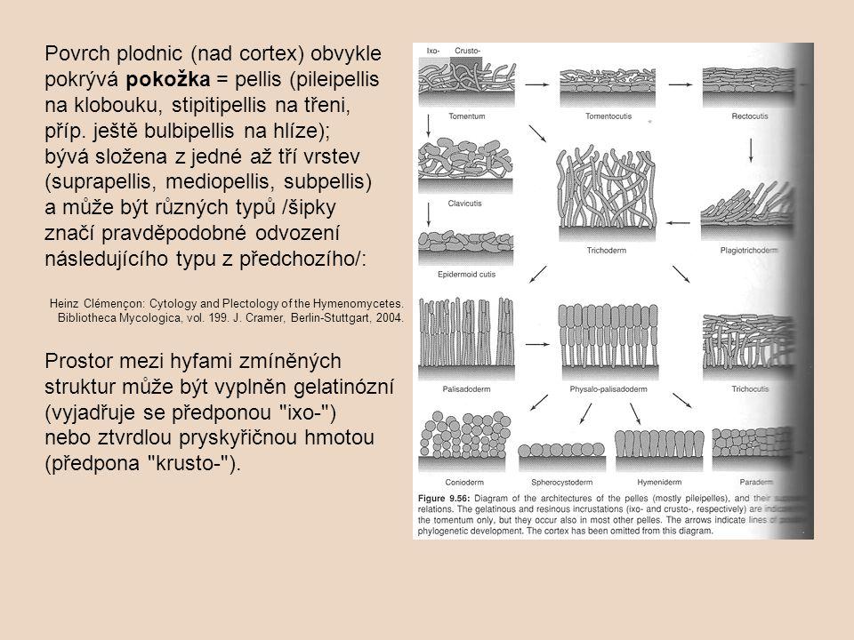 Povrch plodnic (nad cortex) obvykle pokrývá pokožka = pellis (pileipellis na klobouku, stipitipellis na třeni, příp. ještě bulbipellis na hlíze); bývá složena z jedné až tří vrstev (suprapellis, mediopellis, subpellis) a může být různých typů /šipky značí pravděpodobné odvození následujícího typu z předchozího/: