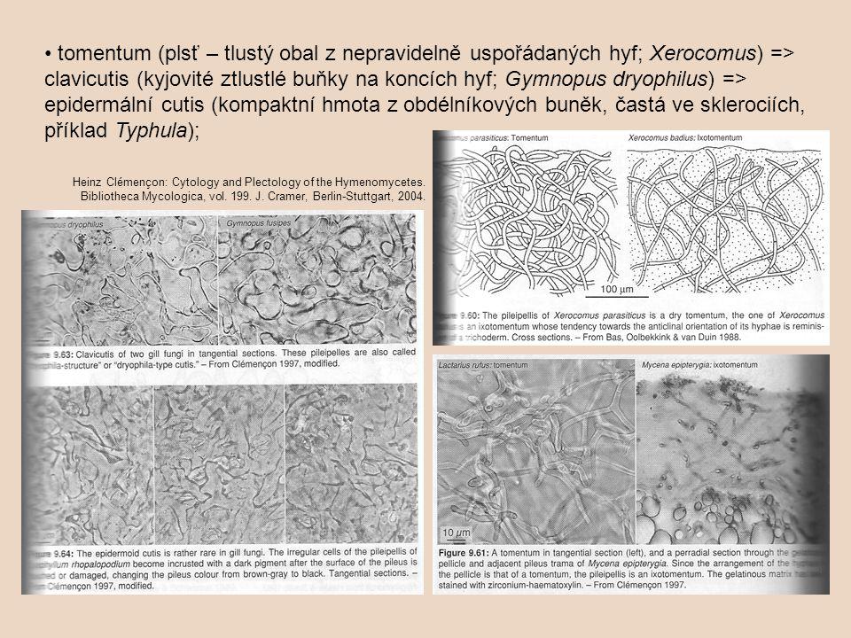 • tomentum (plsť – tlustý obal z nepravidelně uspořádaných hyf; Xerocomus) => clavicutis (kyjovité ztlustlé buňky na koncích hyf; Gymnopus dryophilus) => epidermální cutis (kompaktní hmota z obdélníkových buněk, častá ve sklerociích, příklad Typhula);