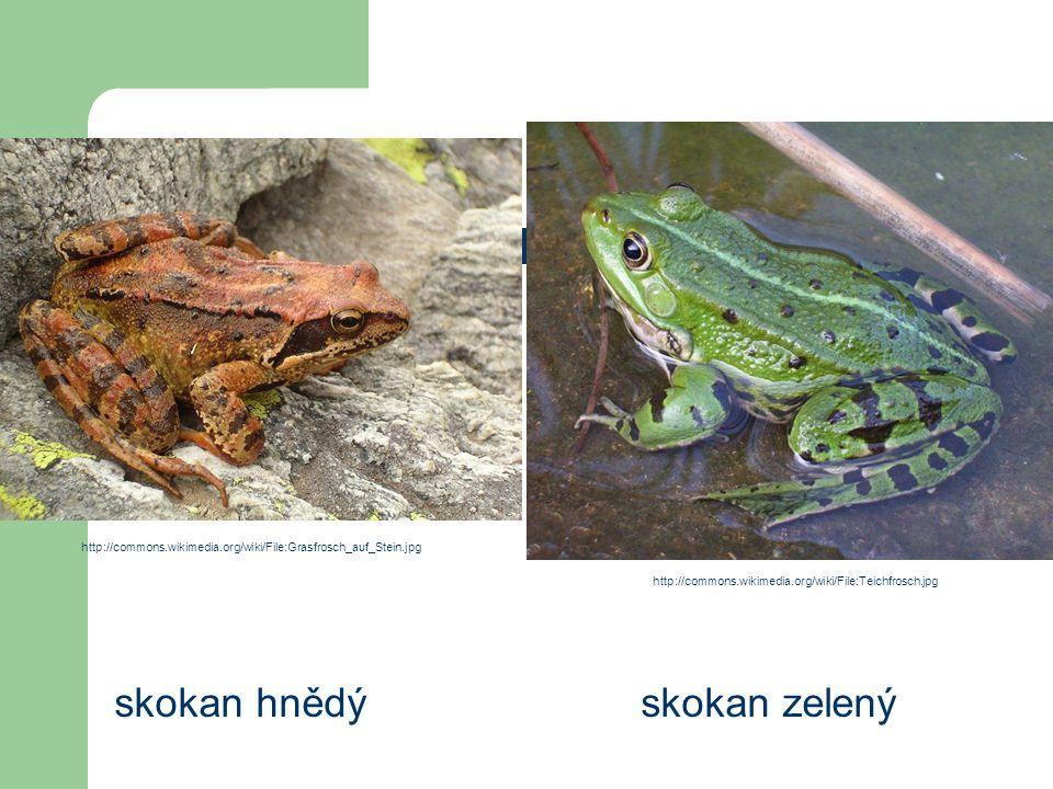 Řád: žáby skokan hnědý skokan zelený