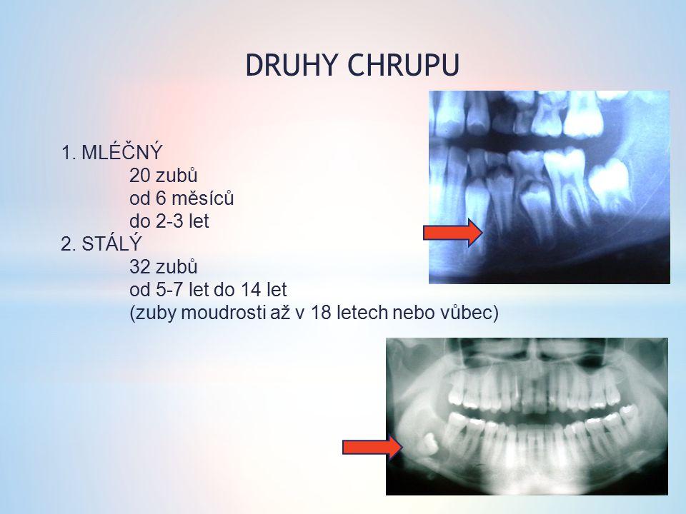 DRUHY CHRUPU 1. MLÉČNÝ 20 zubů od 6 měsíců do 2-3 let 2.