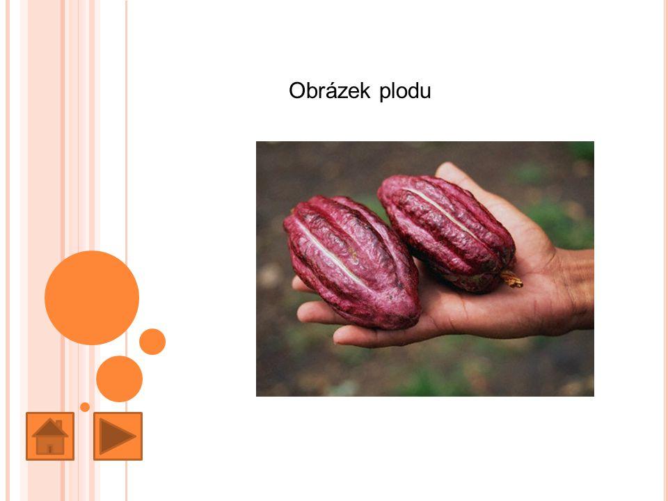 Obrázek plodu