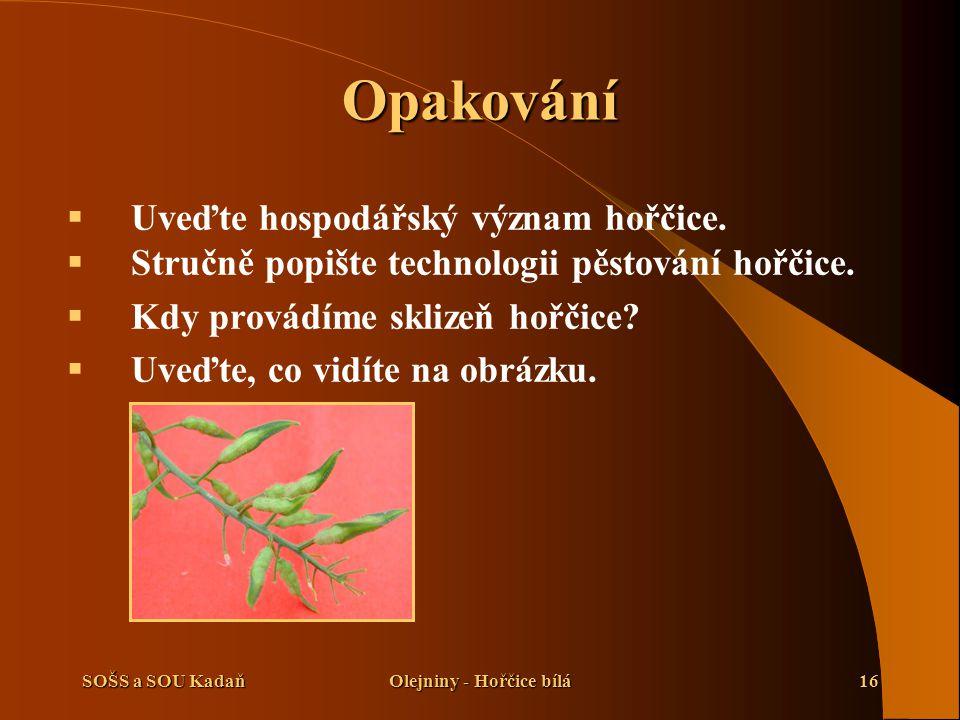 Olejniny - Hořčice bílá