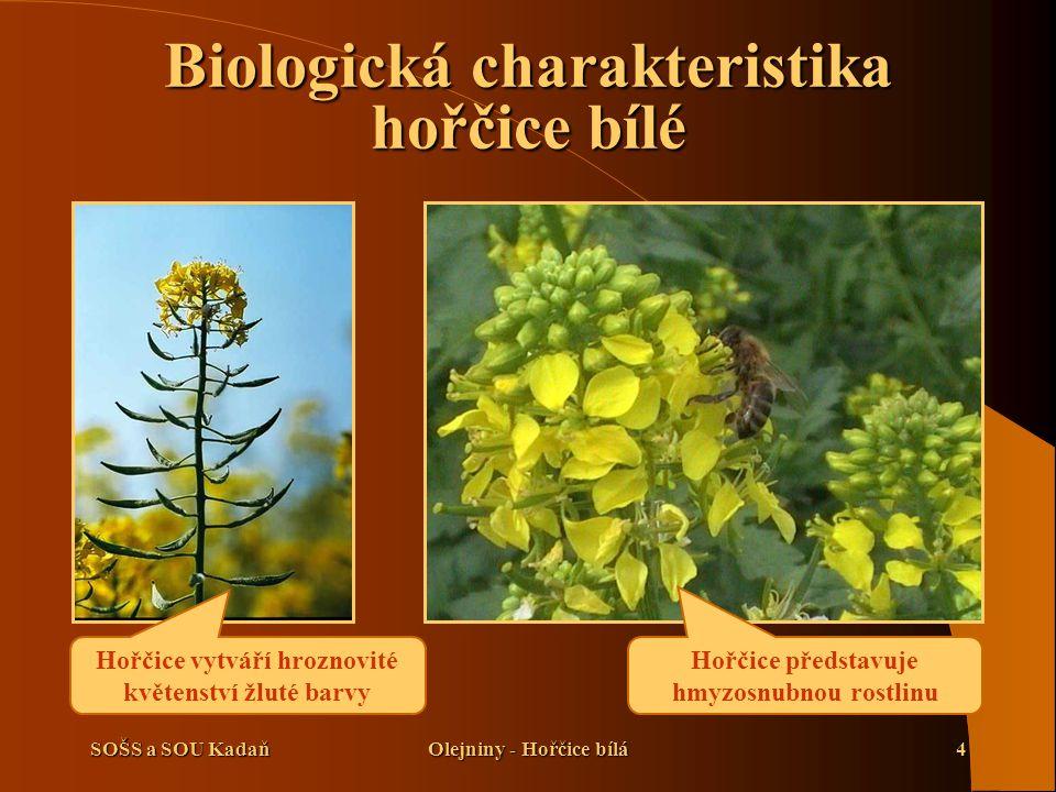 Biologická charakteristika hořčice bílé