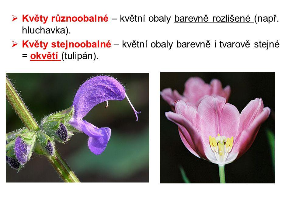 Květy různoobalné – květní obaly barevně rozlišené (např. hluchavka).