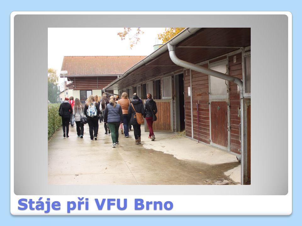 Stáje při VFU Brno