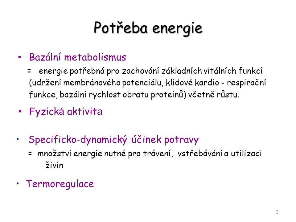 Potřeba energie Bazální metabolismus Fyzická aktivita